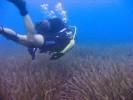 Free dive / SCUBA dive :: Harris Georgiou, Copyright (c) 2008-2011, Licenced under CC BY-ND (Attribution-NoDerivs)